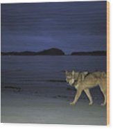 Gray Wolf On Beach At Twilight Wood Print