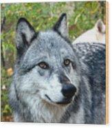 gray Wolf Pair Wood Print