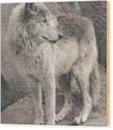 Gray Wolf Profile Wood Print