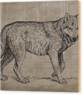 Gray Wolf Timber Wolf Western Wolf Woods Texture Wood Print