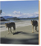 Gray Wolves On Beach Wood Print