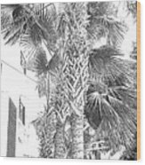 Grayscale Palm Trees Pen And Ink Wood Print