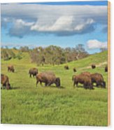 Grazing Buffalo Wood Print