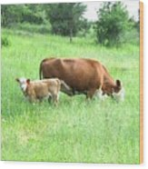 Grazing Cow And Calf Wood Print