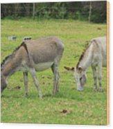 Grazing Donkeys Wood Print