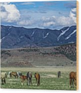 Grazing Herd Wood Print