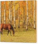 Grazing Horse In The Autumn Pasture Wood Print
