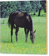 Grazing Horse In The Flowers Wood Print