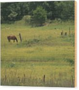 Grazing Horse Wood Print