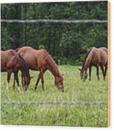 Grazing Horses - Cades Cove - Great Smoky Mountains Tennessee Wood Print