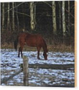 Grazing In A Washington Winter Wood Print