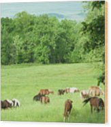 Grazing In The Morning Wood Print