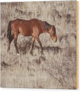 Grazing In The Winter Grass Wood Print