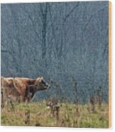Grazing In Winter Wood Print