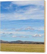 Grazing Sheep - Maniototo Plain Wood Print