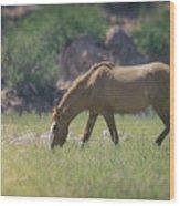 Grazing Wild Mustang  Wood Print