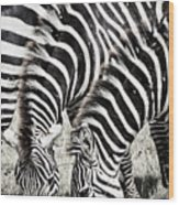 Grazing Zebras Close Up Wood Print