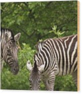 Grazing Zebras Wood Print