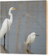 Great And Snowy Egret Wood Print