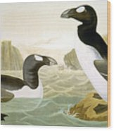 Great Auk (alka Impennis): Wood Print