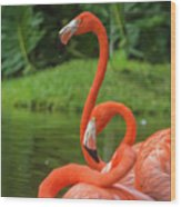 Great Birds Wood Print