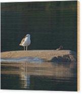 Great Black-backed Gull  Wood Print