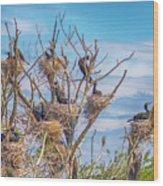 Great Black Cormorants Colony - Danube Delta Wood Print
