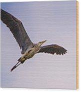 Great Blue Gliding Wood Print