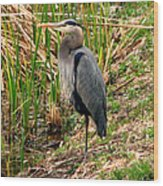 Great Blue Heron 2 Wood Print