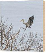 Great Blue Heron 2014-4 Wood Print