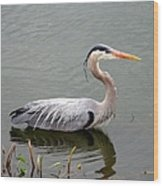 Great Blue Heron 4 Wood Print