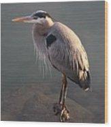 Great Blue Heron - 5 Wood Print