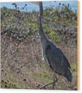 Great Blue Heron - 8 Wood Print