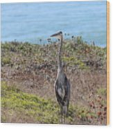 Great Blue Heron - 9 Wood Print