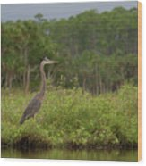 Great Blue Heron Along Cedar Creek Wood Print