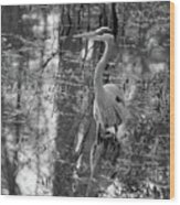 Great Blue Heron And Reflection-black And White Wood Print
