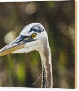 Great Blue Heron At Green Cay Wood Print
