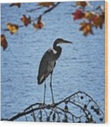 Great Blue Heron At Shores Of King's Mountain Point Wood Print