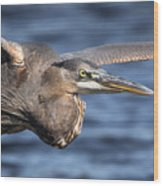 Great Blue Heron Close-up Wood Print