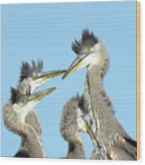 Great Blue Heron Discussion Wood Print