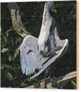 Great Blue Heron Enjoying The Sun Wood Print