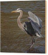 Great Blue Heron - Flooded Creek Wood Print