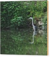 Great Blue Heron Hunting Fish Wood Print