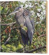 Great Blue Heron In A Tree Wood Print