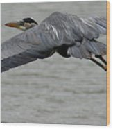 Great Blue Heron In Flight 1 Wood Print