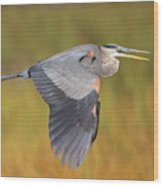 Great Blue Heron In Flight Wood Print by Bruce J Robinson