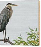 Great Blue Heron in the Rain Wood Print