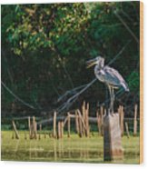 Great Blue Heron Mouth Wood Print