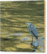 Great Blue Heron On A Golden River Wood Print