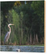Great Blue Heron On A Handrail Wood Print